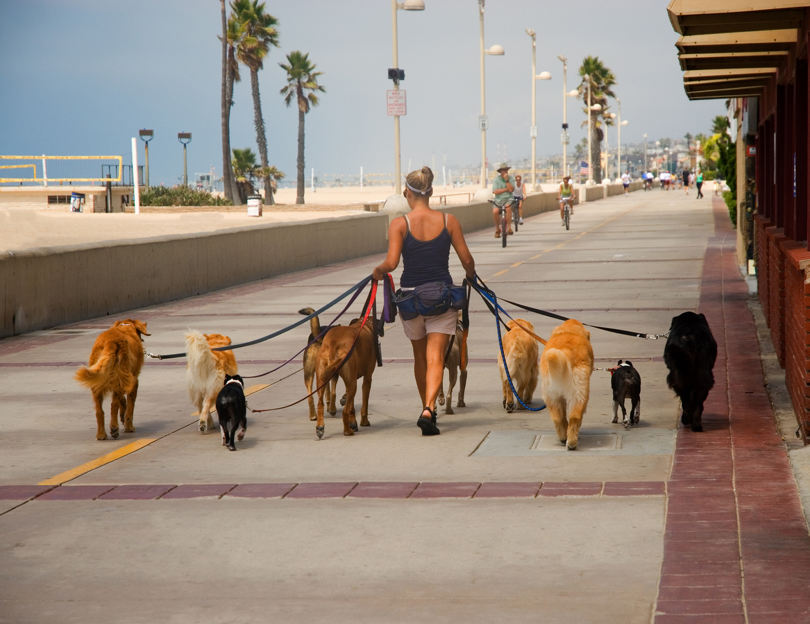 Woman walking several dogs on a leash in a beach town.