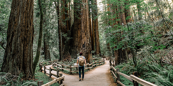 Should You Take a Gap Year or Go to College in Fall 2020?