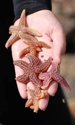 Summer Program - Marine Biology | Acadia Institute: Intermediate Marine Science Camp Program