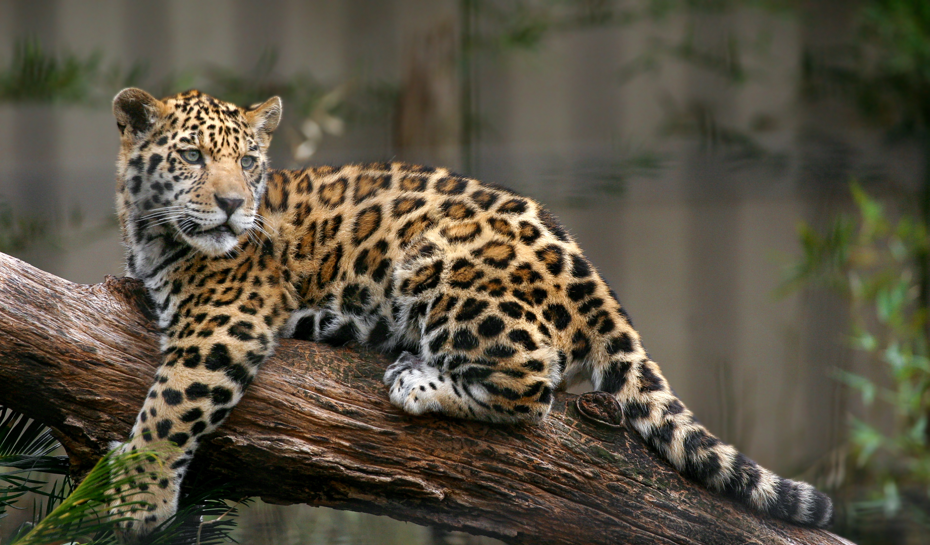 Summer Program - Community Resources | ARCC Programs | Costa Rica: Jaguar Conservation Adventure