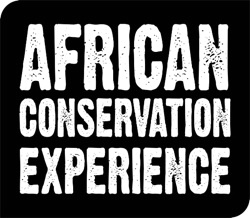 Gap Year Program African Conservation Experience