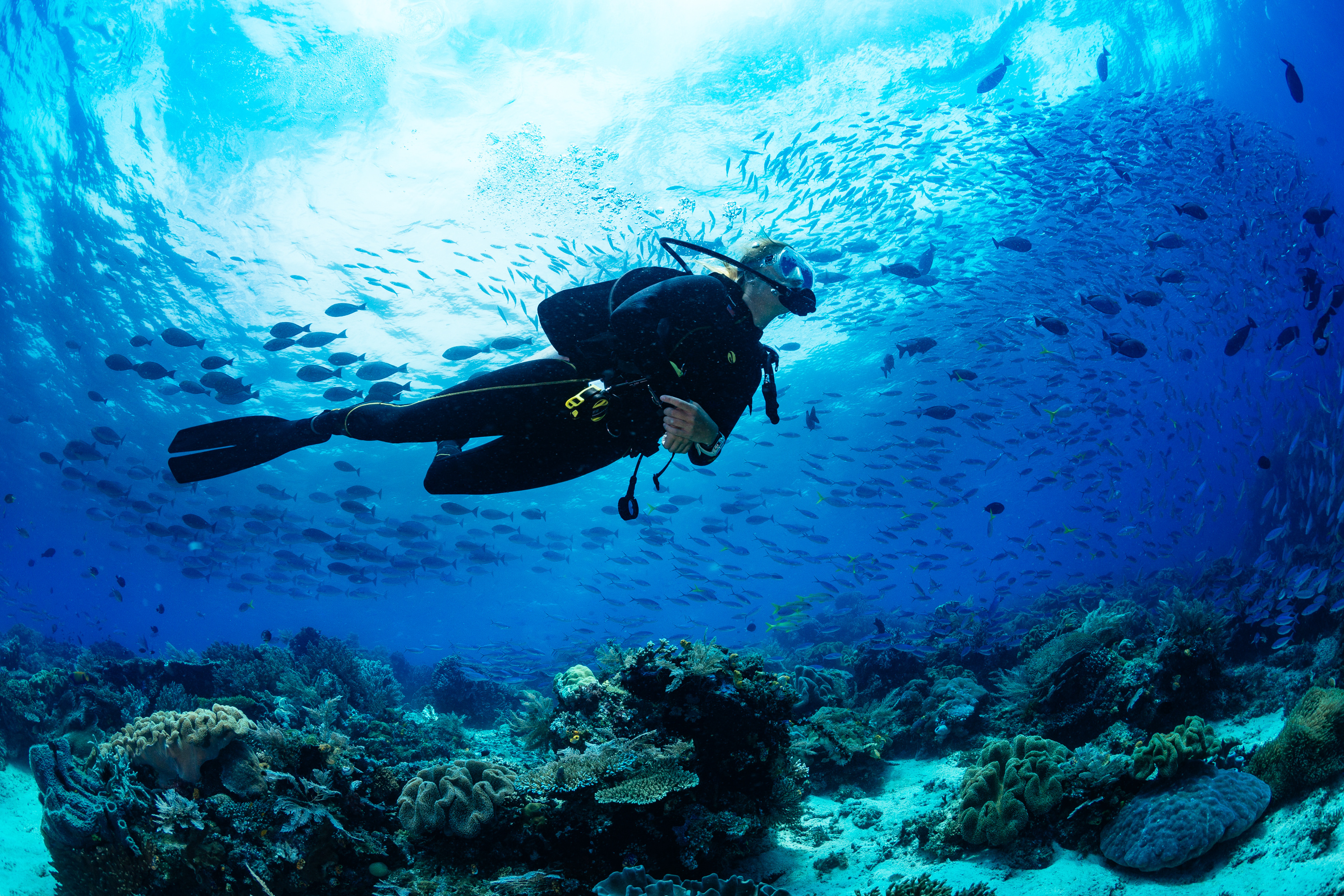 Summer Program - Climate Change | ARCC Programs | Belize: Caribbean Reef Conservation