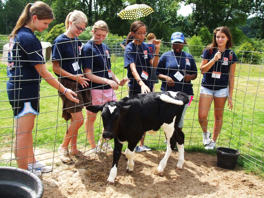 Summer Program - Writing | Auburn University - Summer Programs