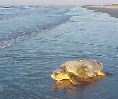 Summer Program - Science | Caretta Research Project