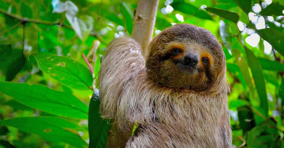 Summer Program - Animals/Nature | Outward Bound Costa Rica