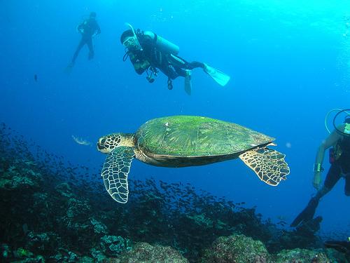 Summer Program - Wildlife Conservation | Outward Bound Costa Rica
