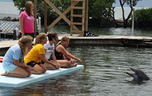 Summer Program - Veterinary Medicine | DolphinLab Teen
