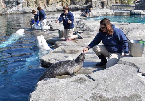Summer Program - Veterinary Medicine | UConn Pre-College Summer: Pre-Vet - Animal Health and Veterinary Science