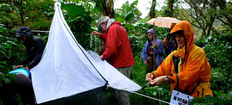 Summer Program - Wildlife Conservation | Earthwatch Institute: Conserving Wild Bees and Other Pollinators of Costa Rica