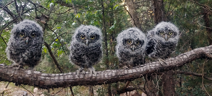 Summer Program - Wildlife Conservation | Earthwatch Institute: Following Forest Owls in the Western US