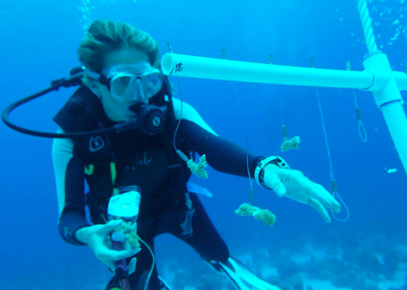 Gap Year Program - Gapforce  Marine Scientist Training  3