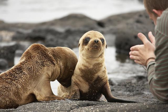 Summer Program - Adventure/Trips | Global Leadership Adventures: Galapagos - Preserving Nature's Wonders