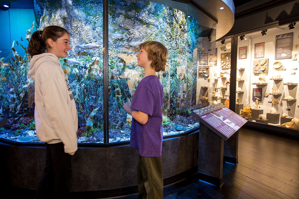 Community Service Organization - Harvard Museum of Natural History  1
