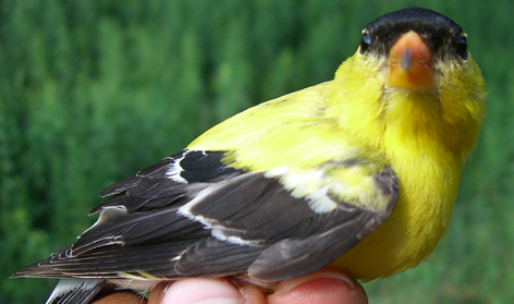 Summer Program - STEM | Wildlife Ecology Research
