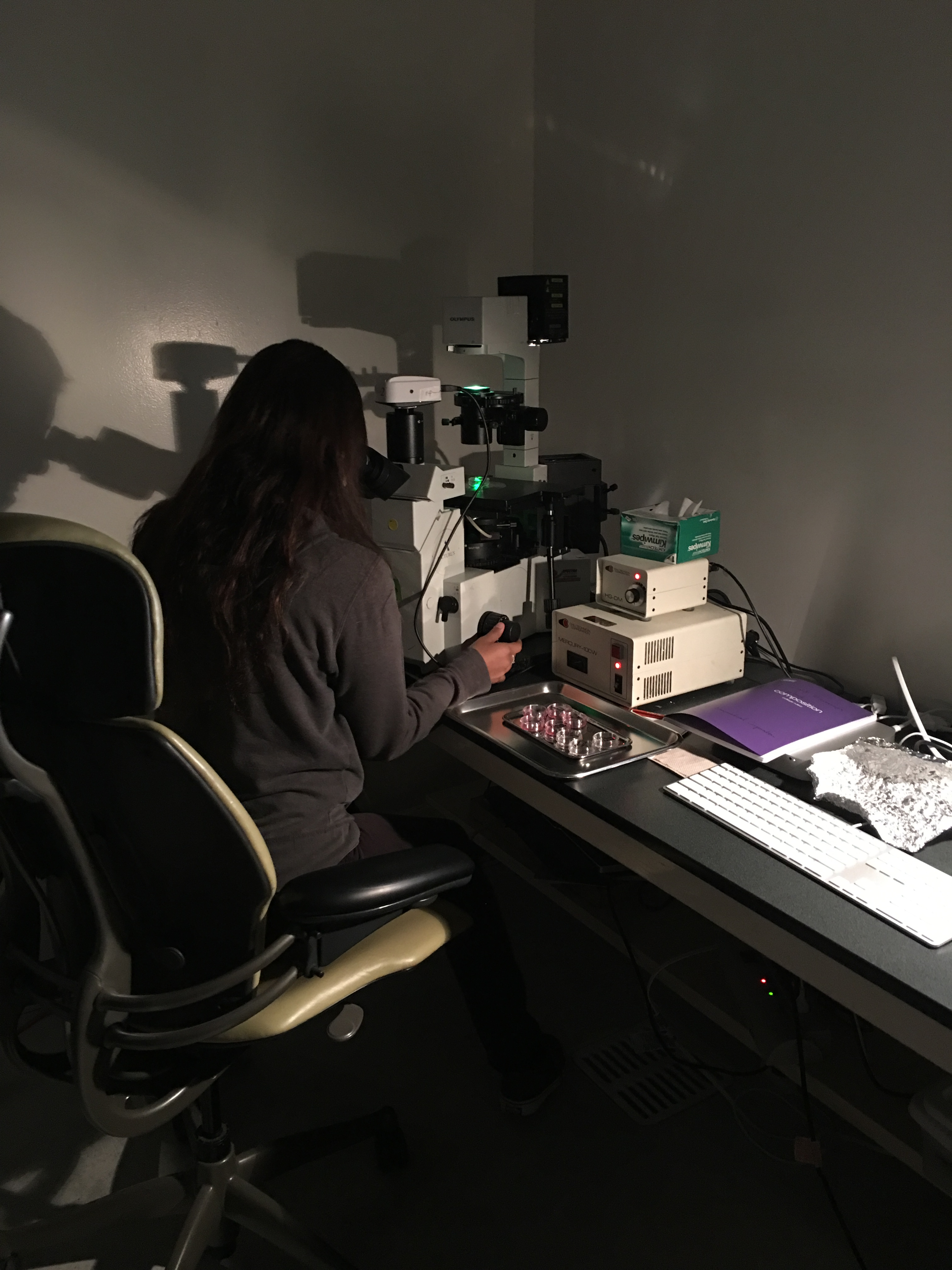 Summer Program - Bio Technology | Intro to Stem Cell Systems