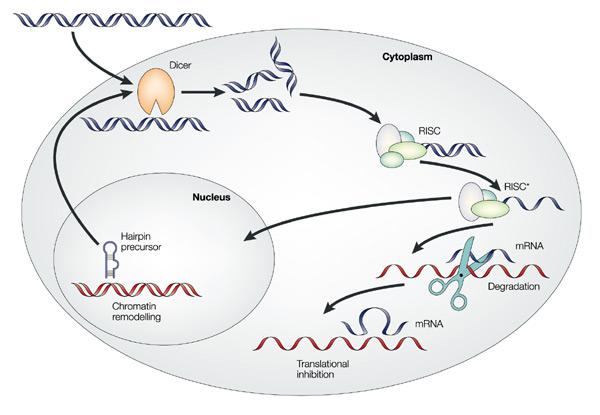Summer Program - Engineering | Methods in Stem Cell Engineering