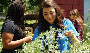 Summer Program - Science | National Student Leadership Conference (NSLC) | Environmental Science & Sustainability