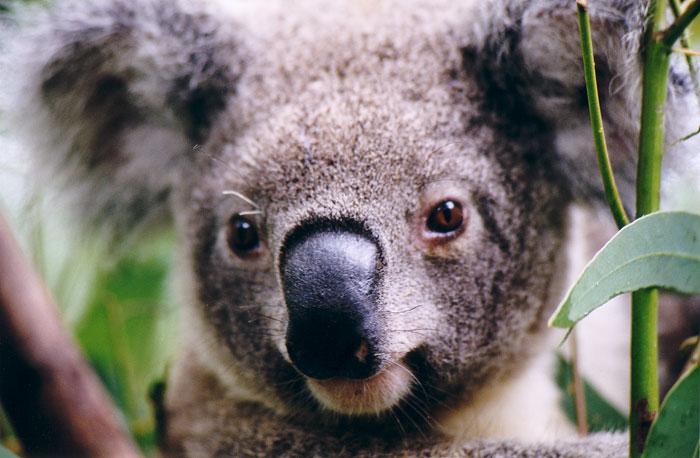 Summer Program - Tours | Pacific Discovery: Australia Summer Program