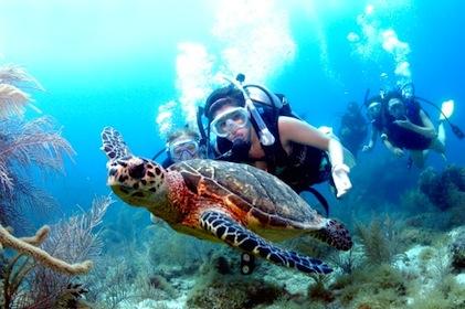 Summer Program - Scuba Diving | Sail Caribbean Summer Adventures