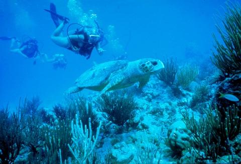 Summer Program - Environmental Conservation | Seacamp Association Inc.
