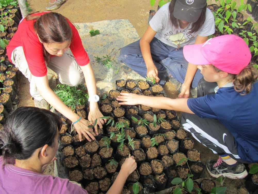 Summer Program - Preserving the Environment | ARCC Programs | Bali/Sumatra: Operation Orangutan