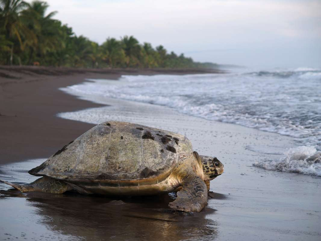 Summer Program - Animal Rights and Rescue | Travel For Teens: Costa Rica Sea Turtle Service and Adventure