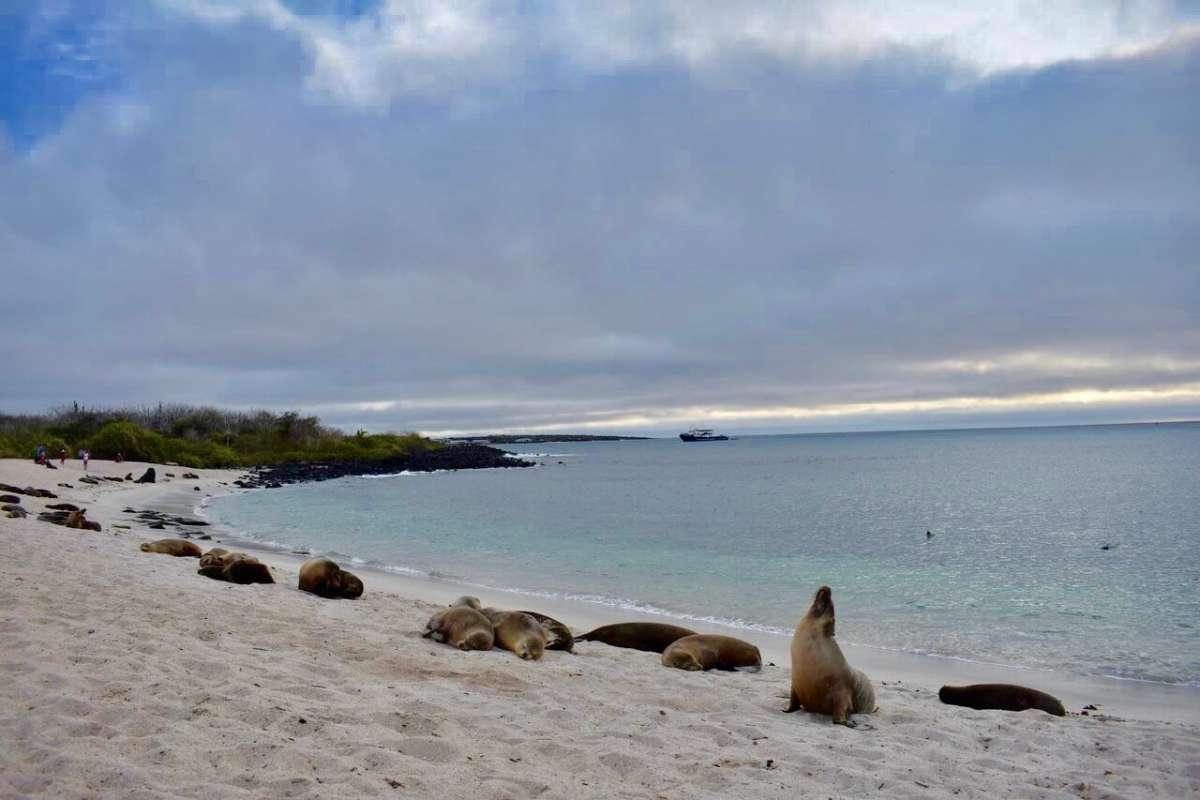 Summer Program - International Relief   Travel For Teens: Ecuador and the Galápagos Service