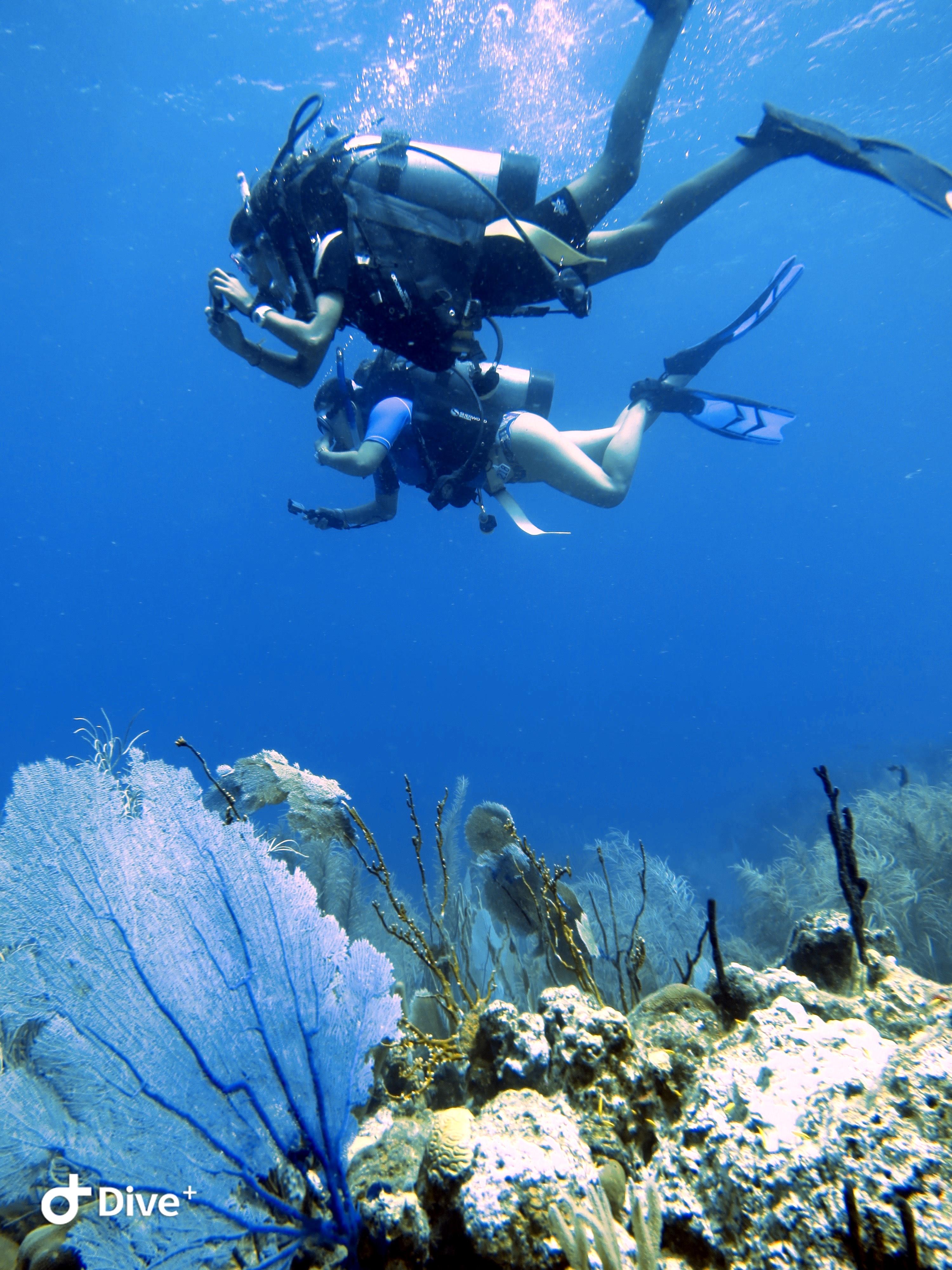 Summer Program: SeaTrek BVI: Trek 5