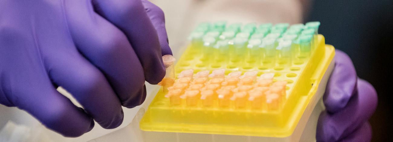 Summer Program - Science | Tufts Summer Study: Bioinformatics Inquiry through Sequencing
