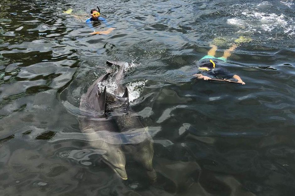 Summer Program - Marine Biology | University of Miami Summer Scholars: Marine Science