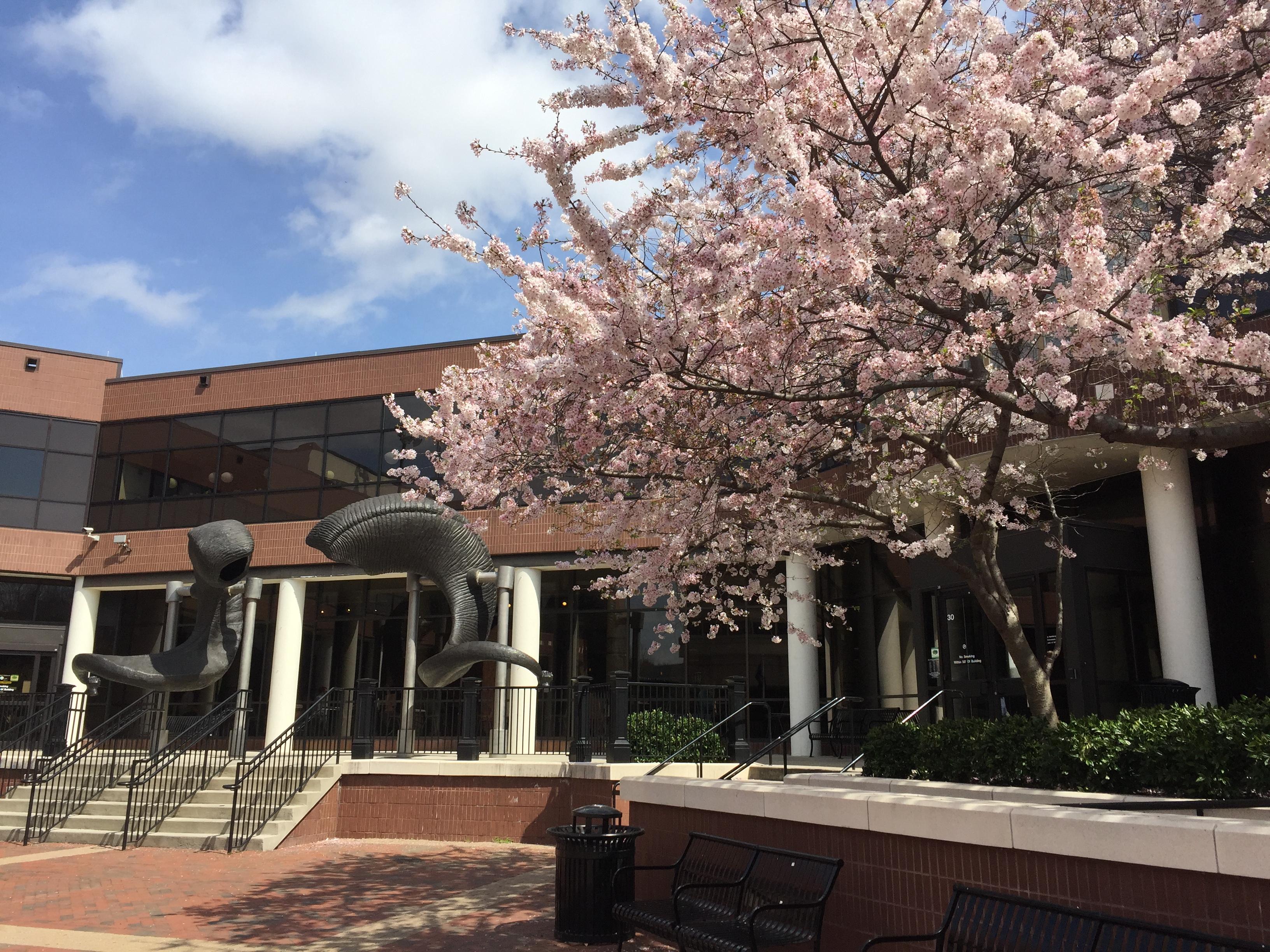 College - Virginia Commonwealth University  4